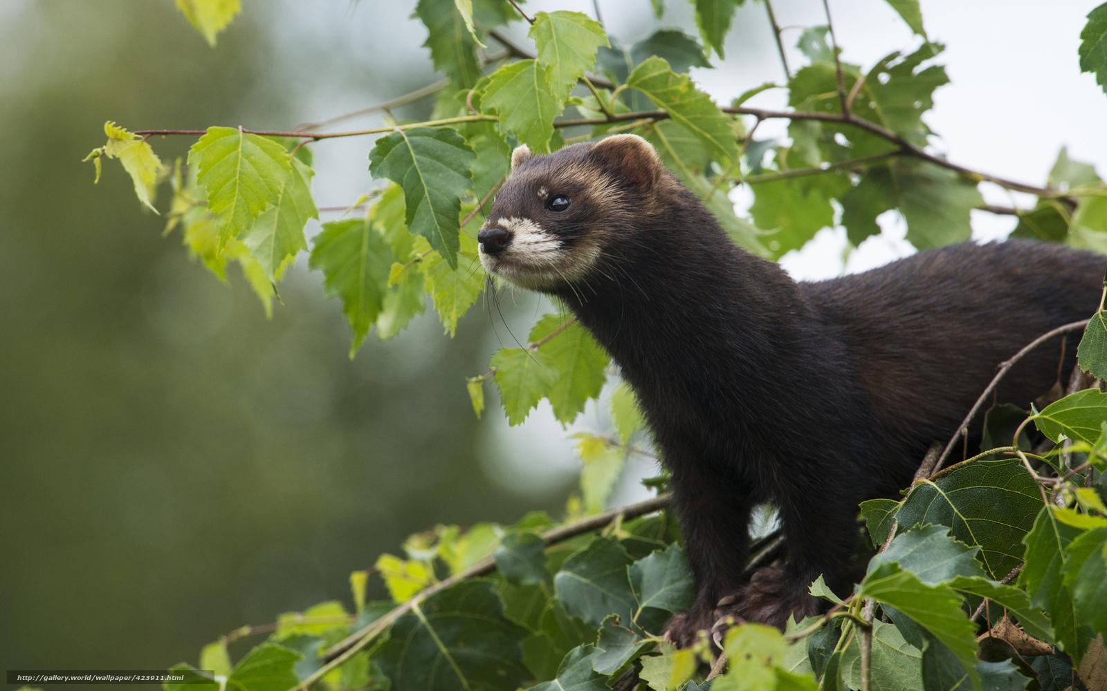 foto de Tlcharger Fond d'ecran loutre, animal, Nature Fonds d'ecran ...