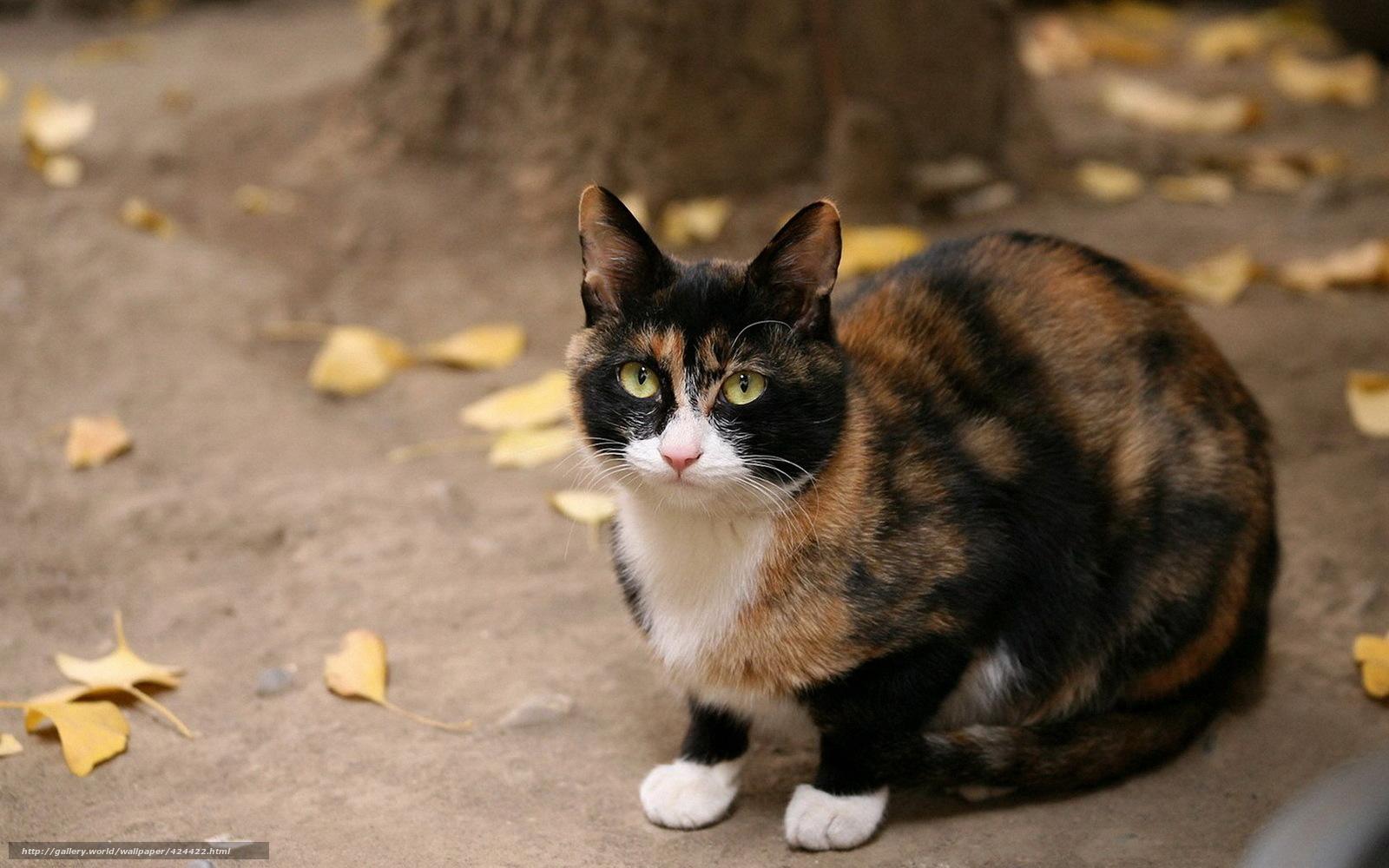 Scaricare Gli Sfondi Gatto Nero Rosso Seduta Sfondi Gratis Per La