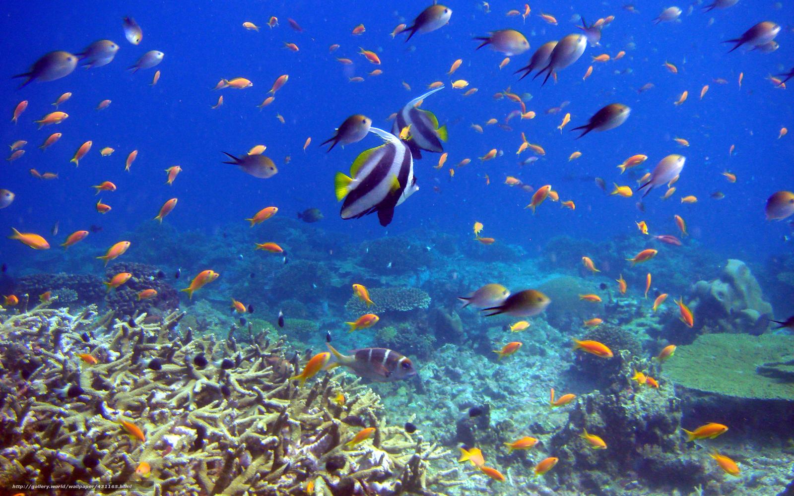 Descargar Gratis Pescado Los Corales El Mundo Submarino