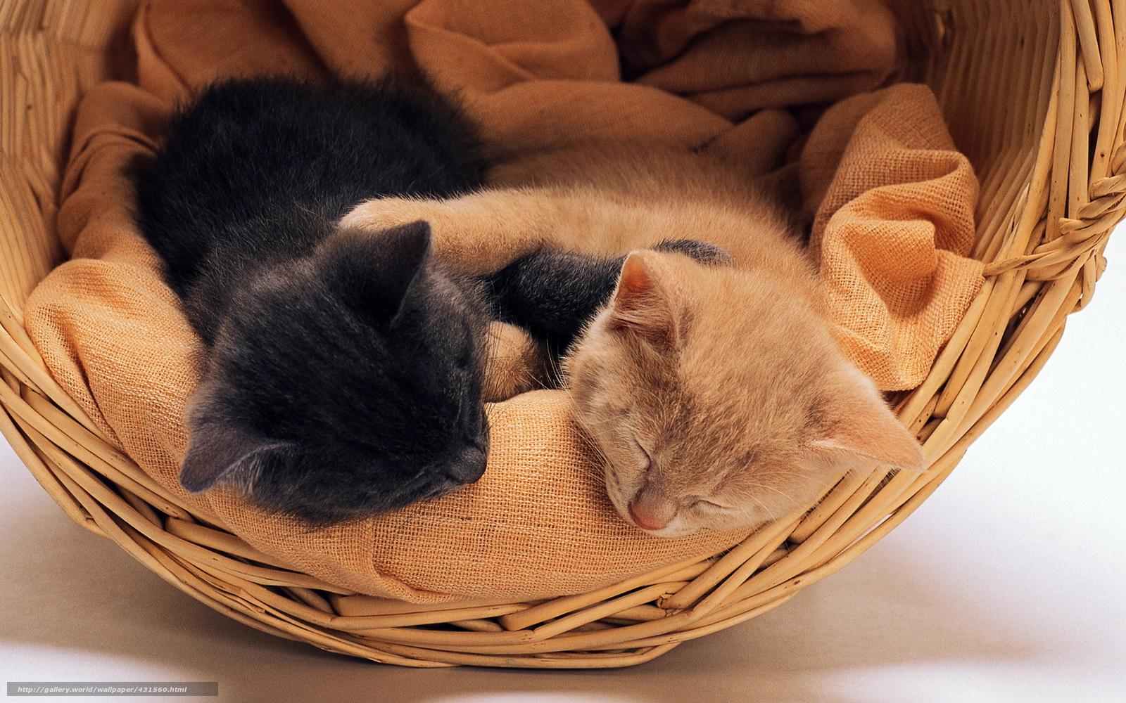 Обои на рабочий стол коты обнимаются