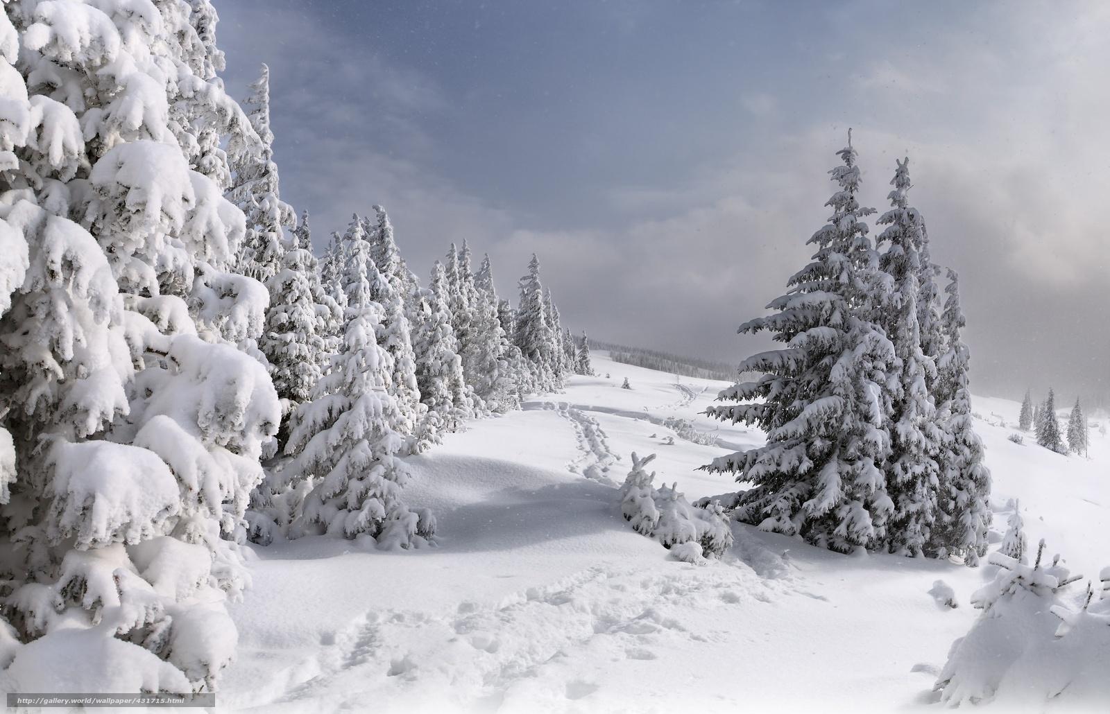 Scaricare Gli Sfondi Natura Inverno Foresta Neve Sfondi Gratis