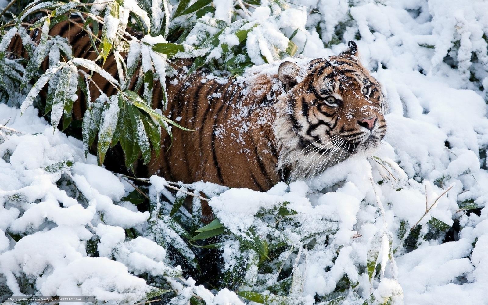 Картинки о зиме
