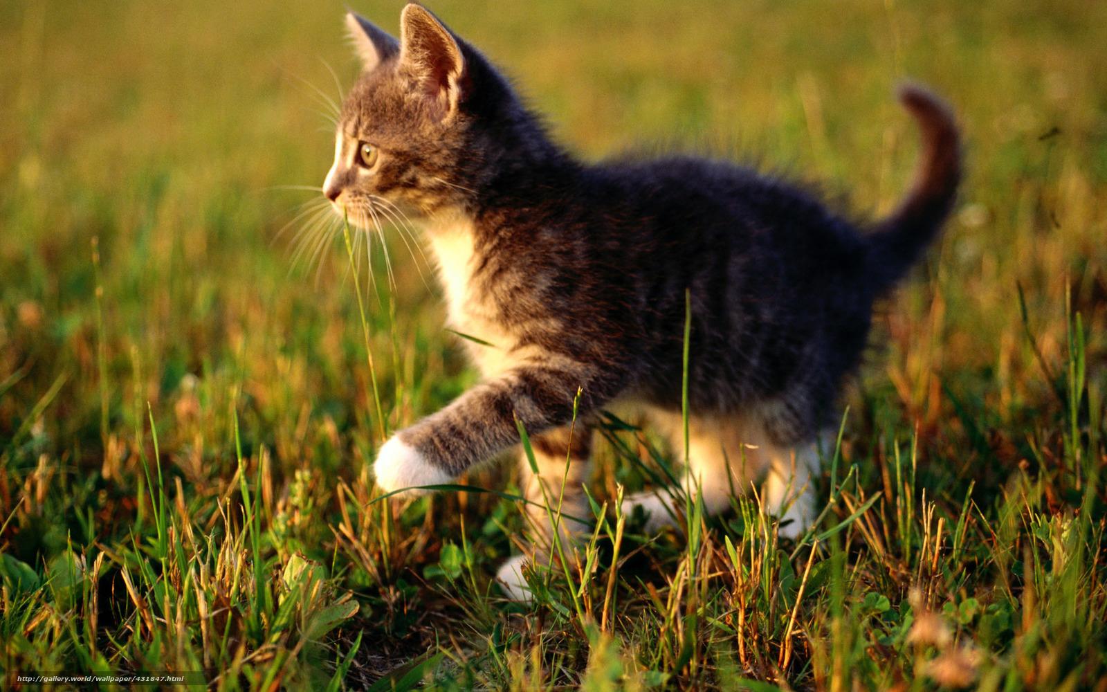 Download Wallpaper Cat Kitten Macro Free Desktop