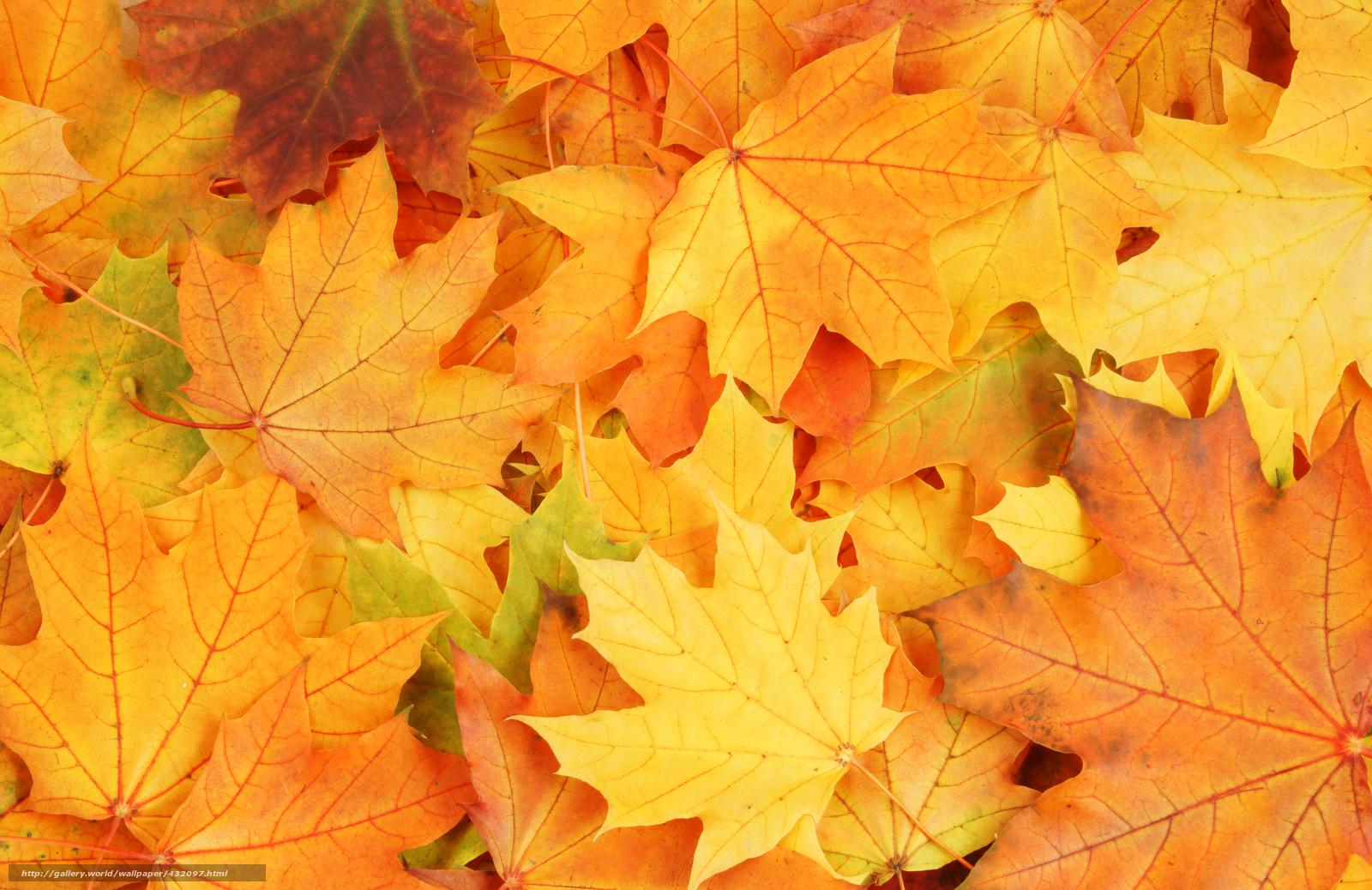 Скачать обои листья,  осень,  яркие краски,  увядание бесплатно для рабочего стола в разрешении 6000x3892 — картинка №432097