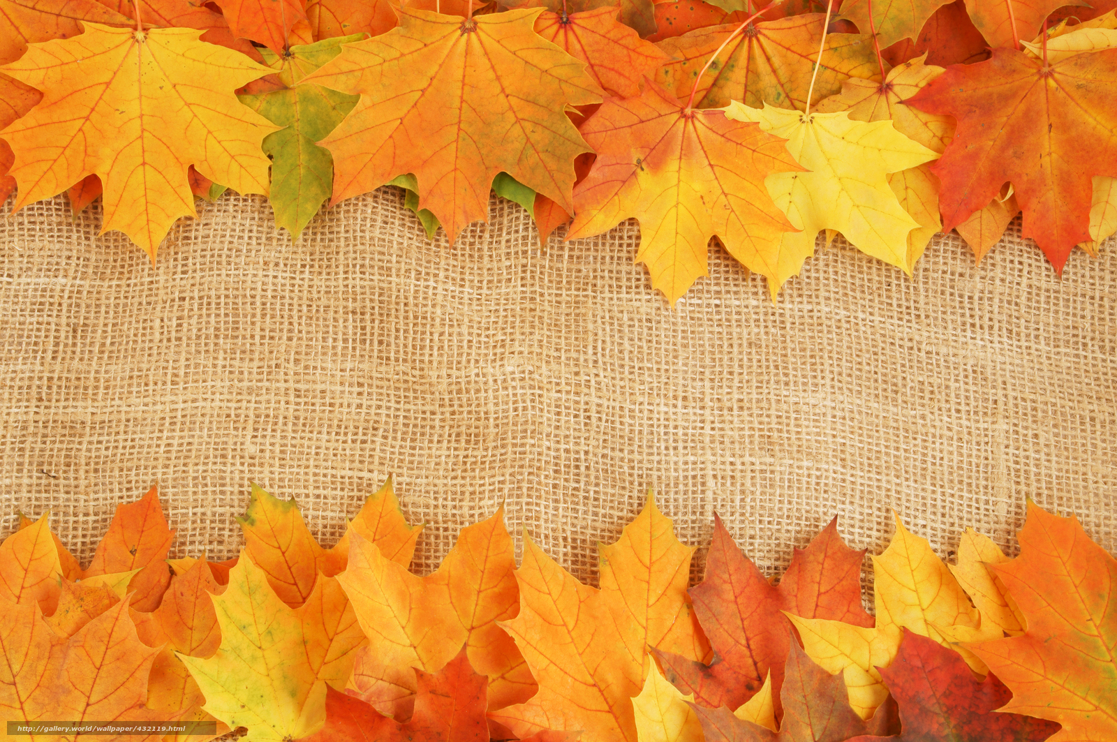 Download wallpaper leaves, veins, autumn, heap free desktop ...