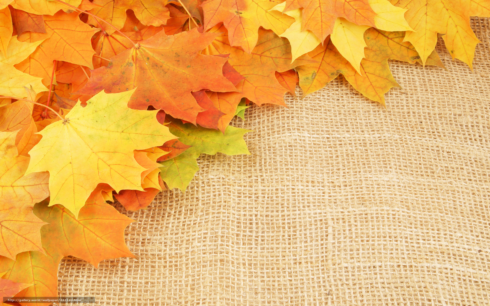 Download wallpaper leaves,  autumn,  veins free desktop wallpaper in the resolution 1680x1050 — picture №432140