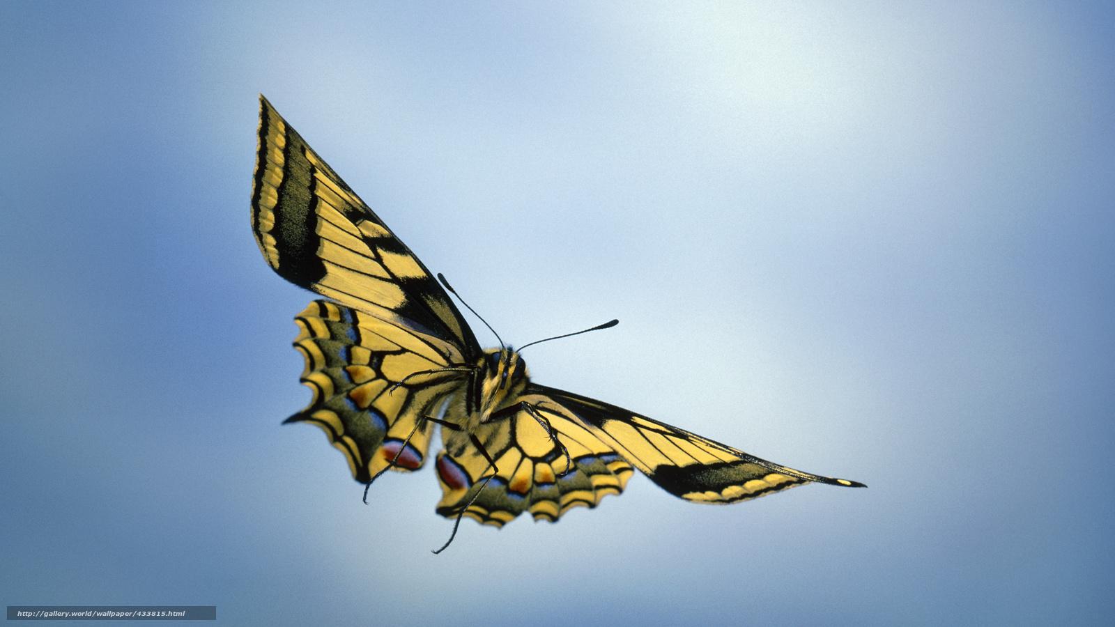 Скачать обои Небо,  бабочка,  крылышки бесплатно для рабочего стола в разрешении 1920x1080 — картинка №433815