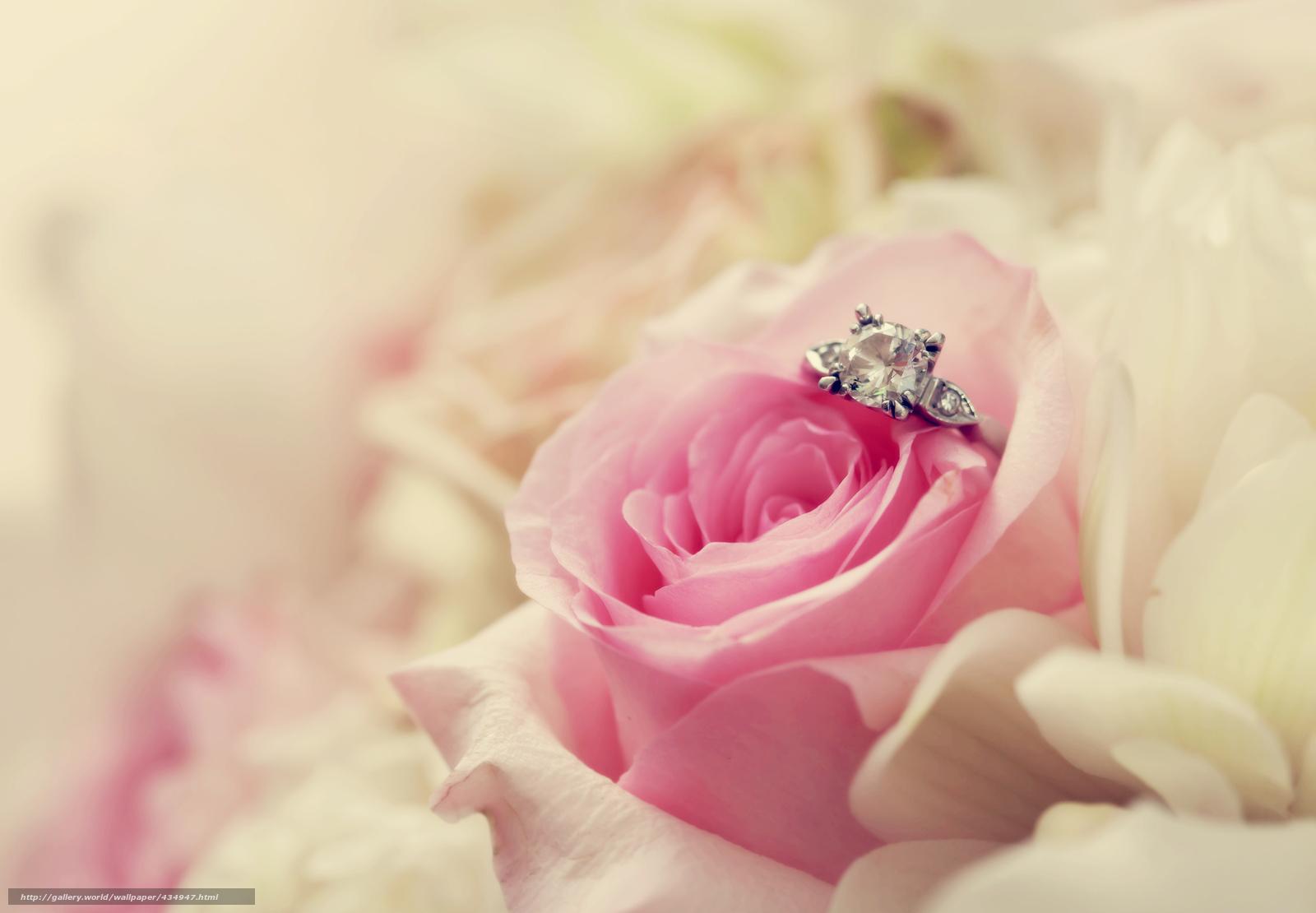 tlcharger fond d'ecran fleur, rose, anneau, macro fonds d'ecran