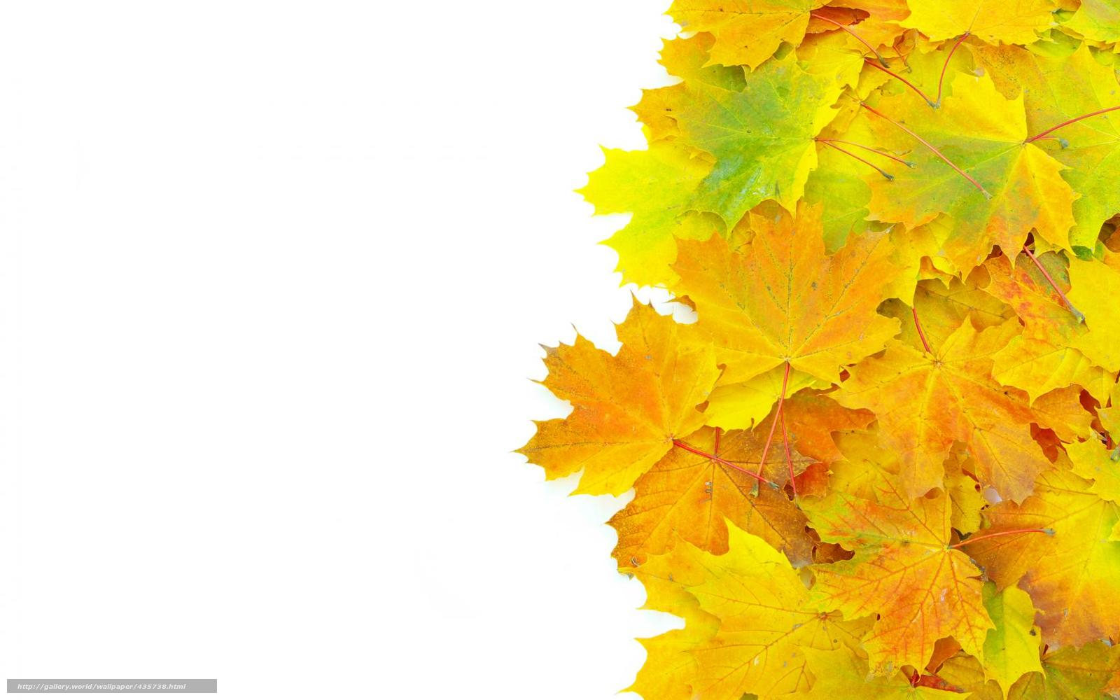 Download wallpaper leaves, veins, transparency free desktop ...