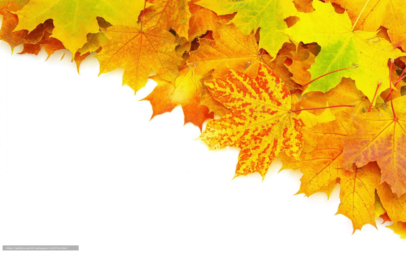 Download wallpaper leaves, autumn, veins, brightness free desktop ...
