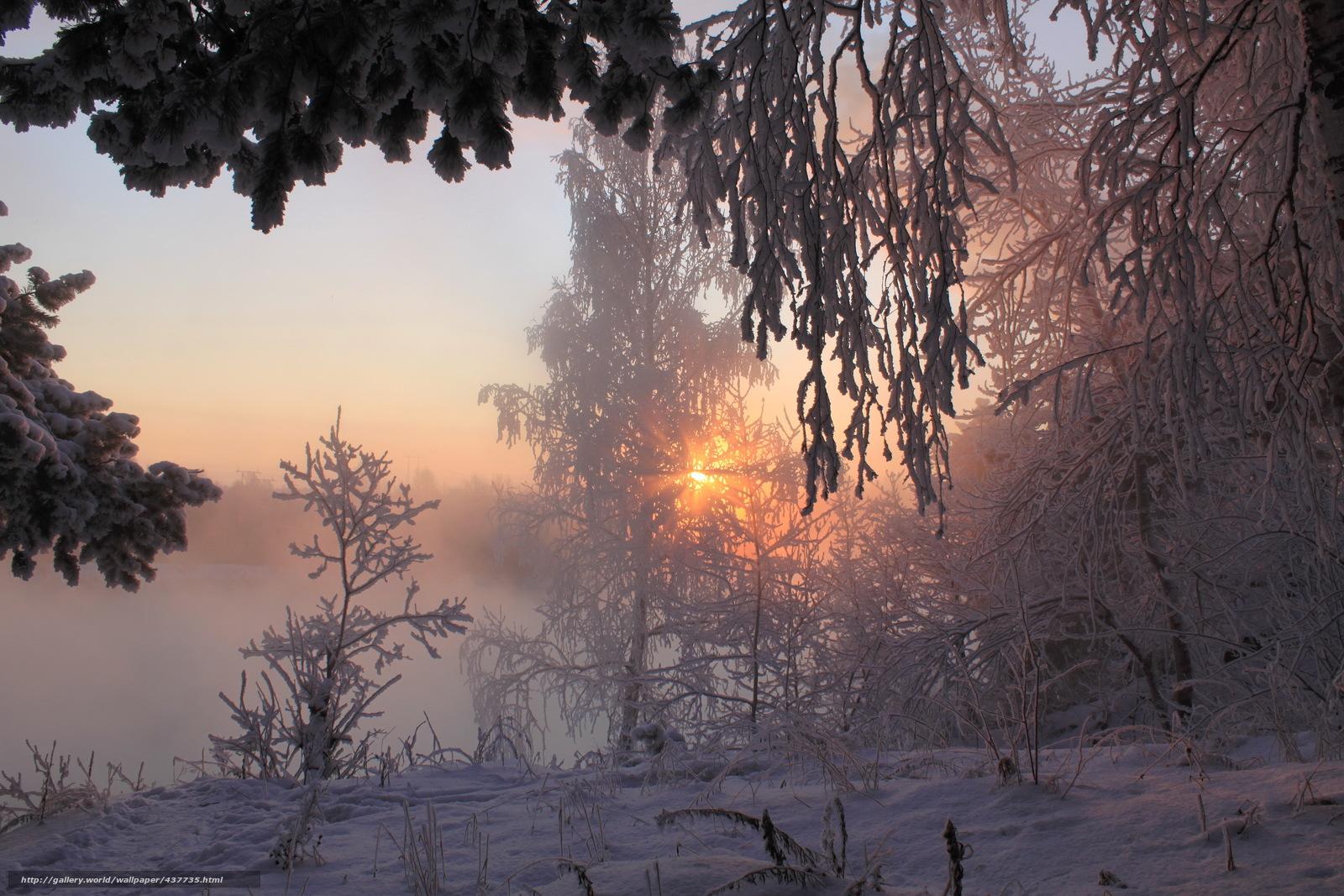 下载壁纸 冬季,  雪,  树,  景观 免费为您的桌面分辨率的壁纸 3345x2230 — 图片 №437735