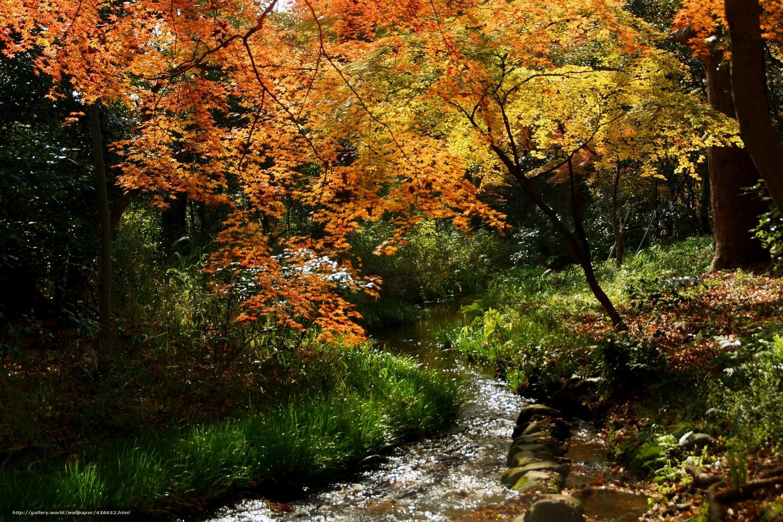 scaricare gli sfondi autunno,  foresta,  torrente Sfondi gratis per la risoluzione del desktop 2400x1600 — immagine №438652