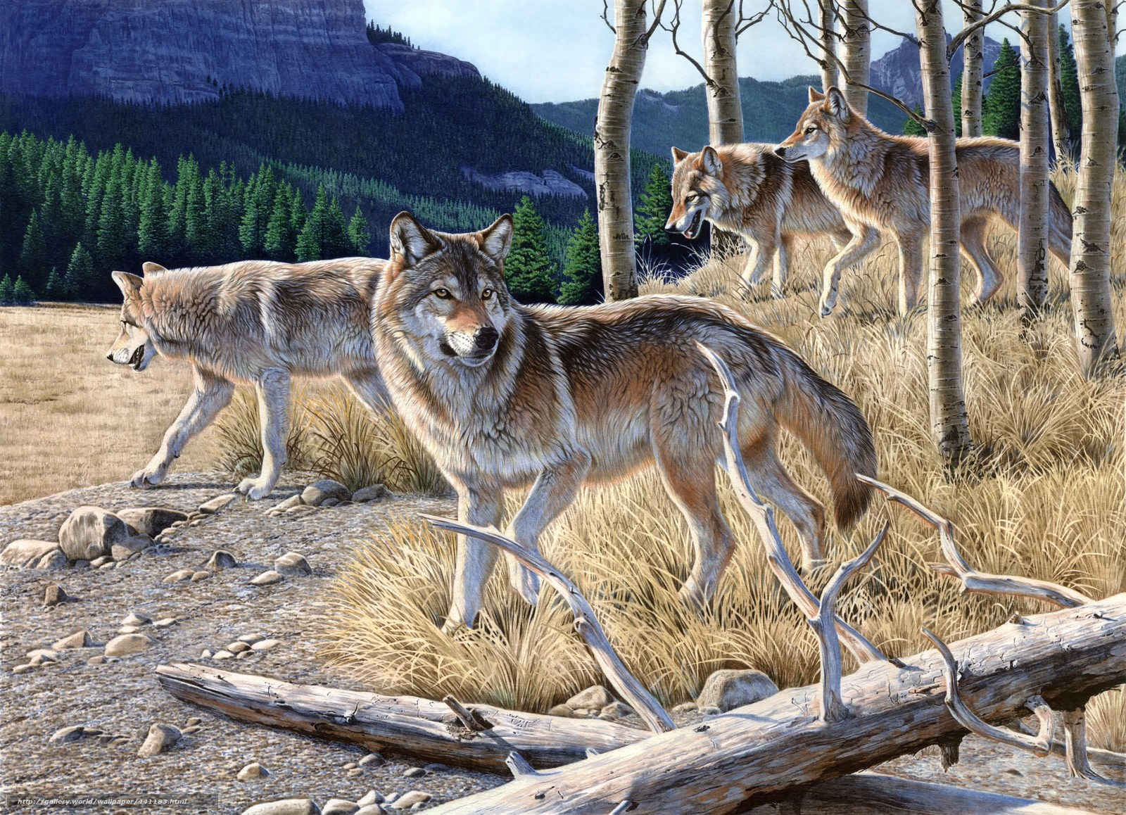 Download wallpaper painting,  Wolves,  wolves,  mountain free desktop wallpaper in the resolution 2426x1756 — picture №441183