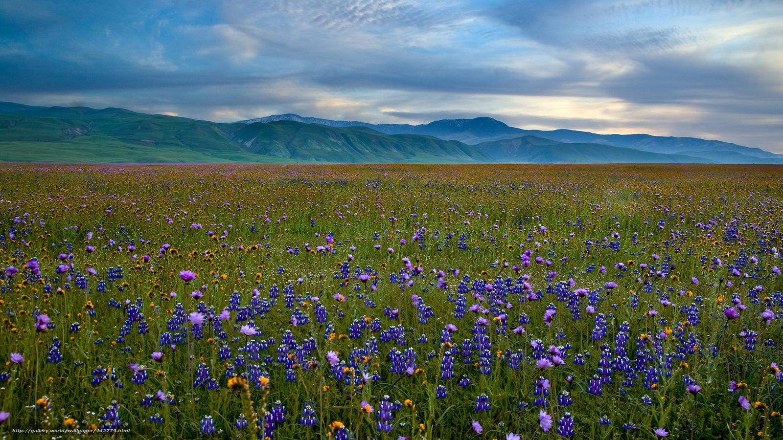 壁纸 草原 风景 摄影 桌面 1600_900