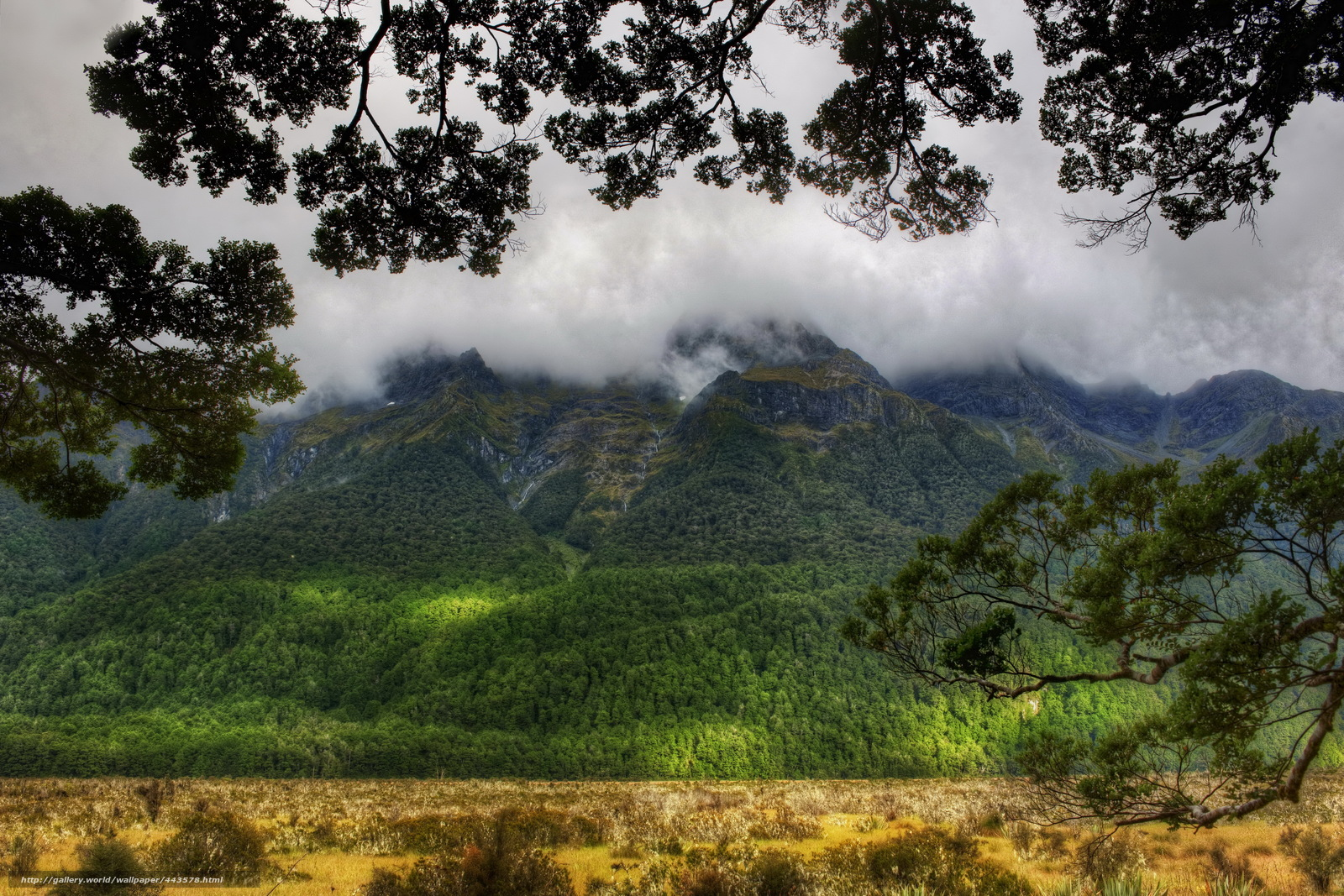 Download wallpaper Mountains,  Forest,  clouds,  branch free desktop wallpaper in the resolution 4289x2860 — picture №443578