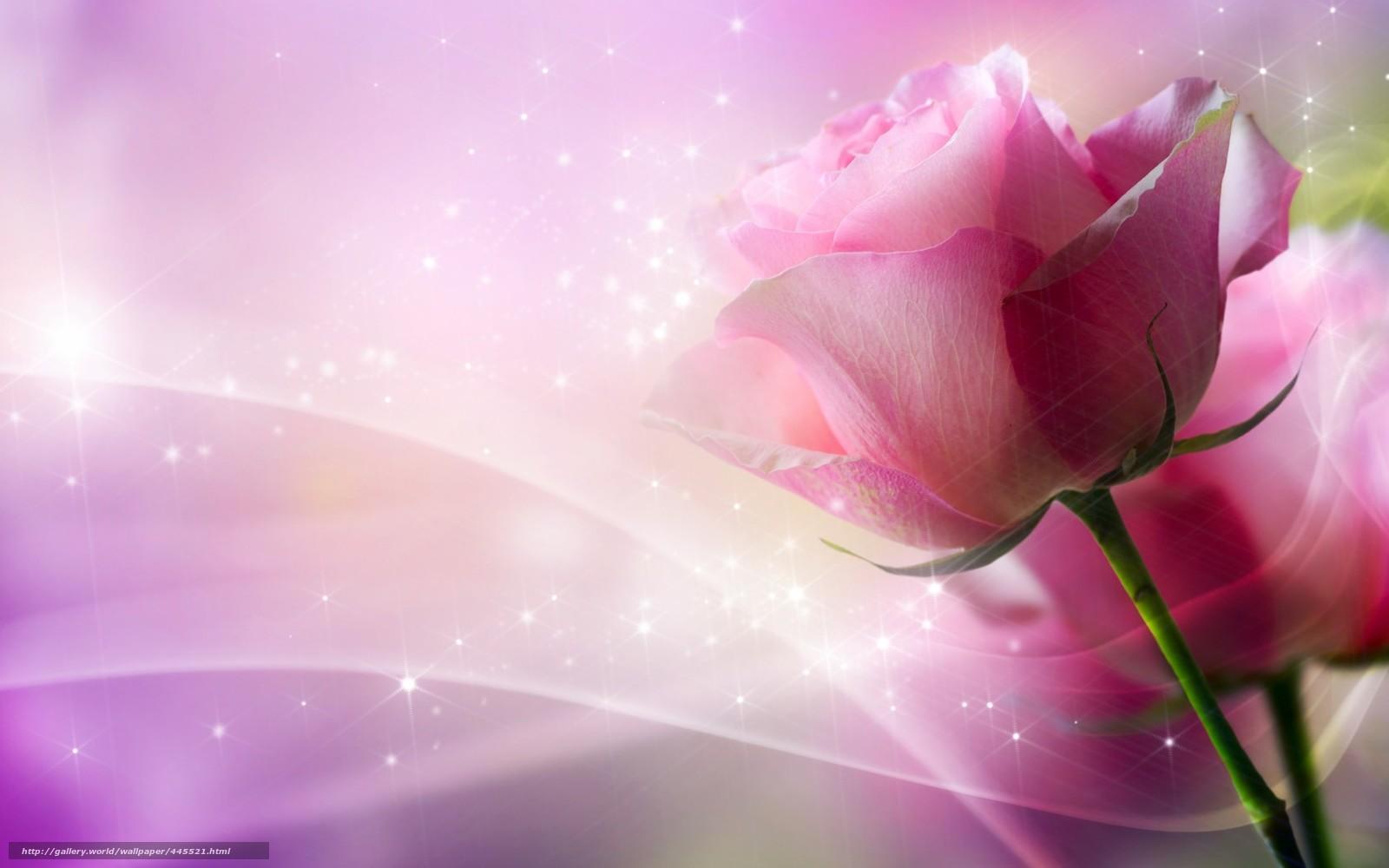Scaricare gli sfondi fiore rosa curve sfondi gratis per for Immagini per desktop fiori
