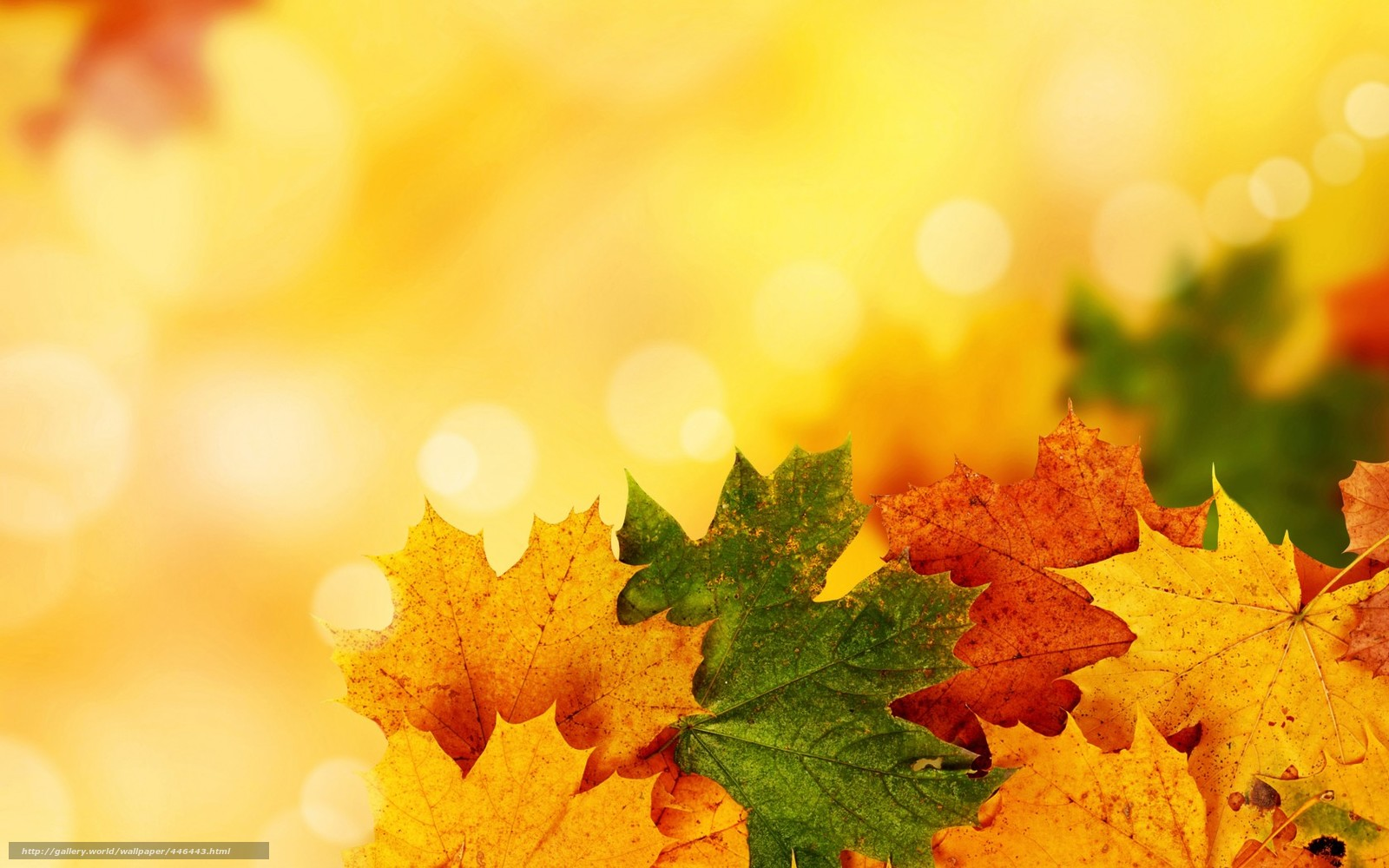 Download wallpaper leaves, autumn, veins, heap free desktop ...