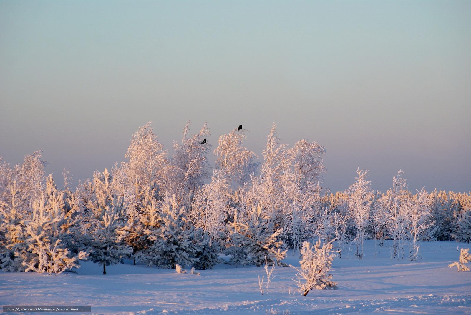 Скачать обои Зима,  Небо,  Снег,  Деревья бесплатно для рабочего стола в разрешении 2592x1735 — картинка №451161