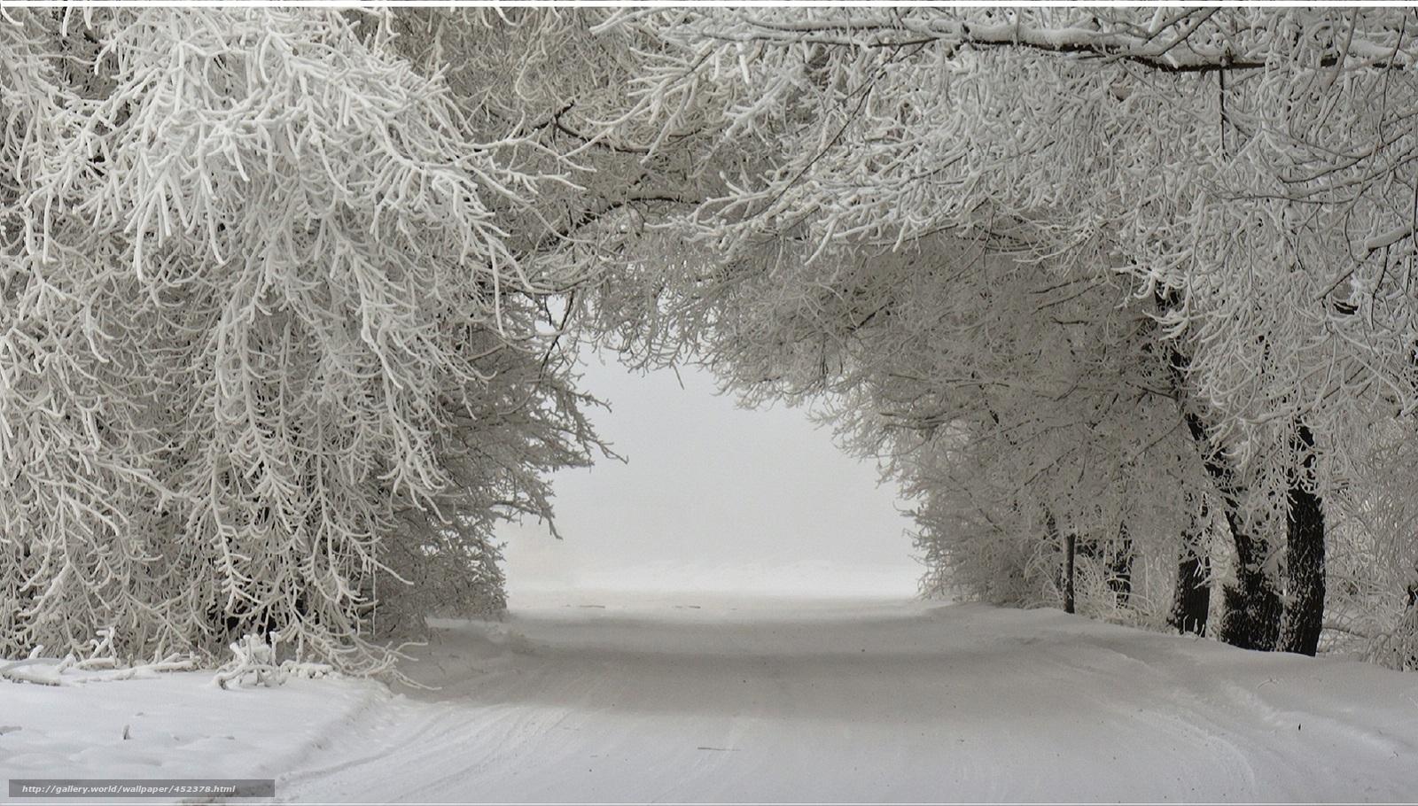Scaricare gli sfondi paesaggio invernale alberi nella for Immagini invernali per desktop gratis