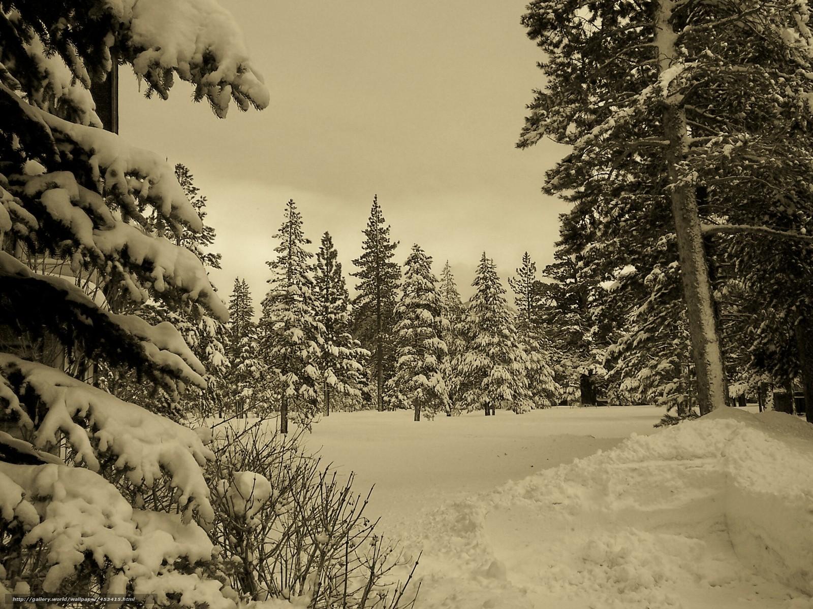 Tlcharger Fond d'ecran hiver,  fort,  neige,  Nature Fonds d'ecran gratuits pour votre rsolution du bureau 2304x1728 — image №453415