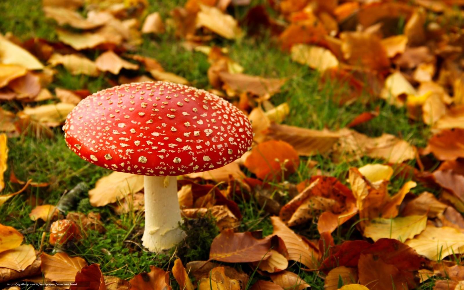 Осень в деревне картинки красивые