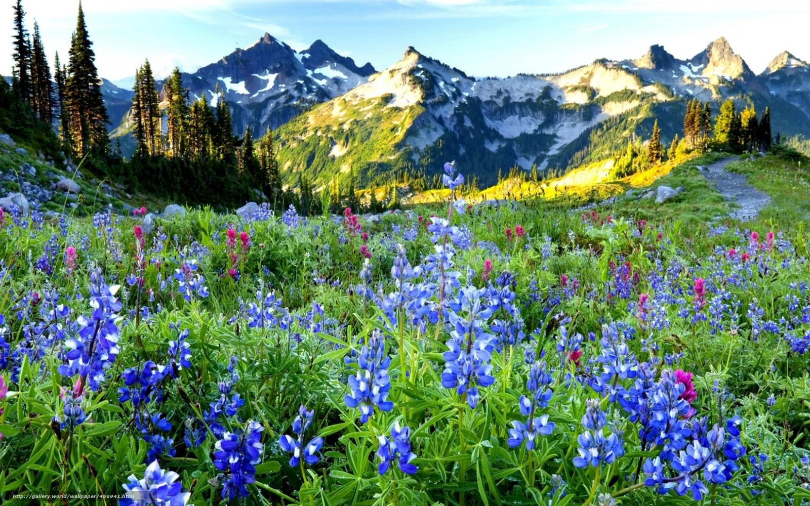 Scaricare Gli Sfondi Primavera Montagne Fiori Sfondi Gratis Per La