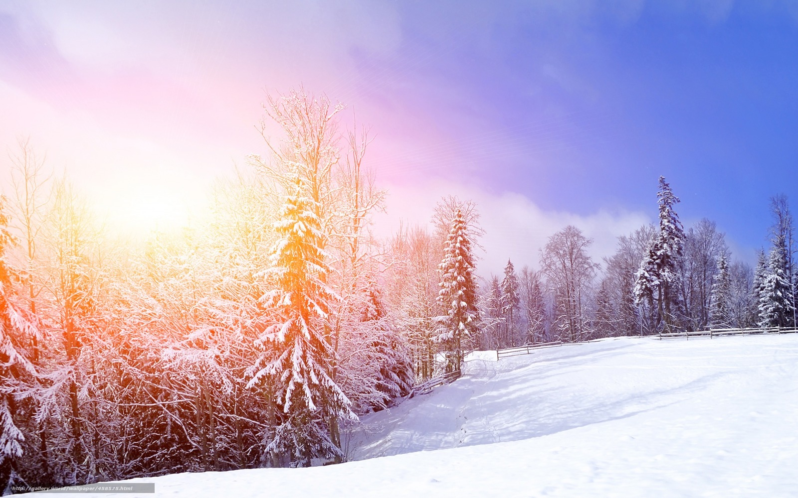 Картинки деревья зима бесплатно