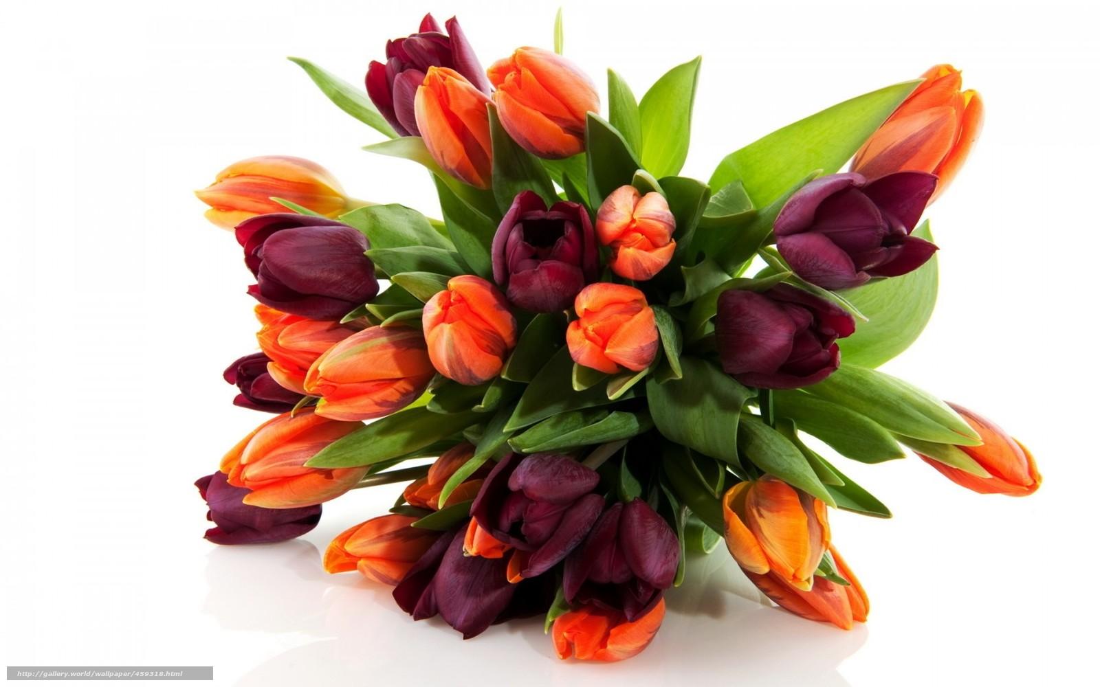 Scaricare Gli Sfondi Fiori Fiore Mazzo Di Fiori Tulipani Sfondi