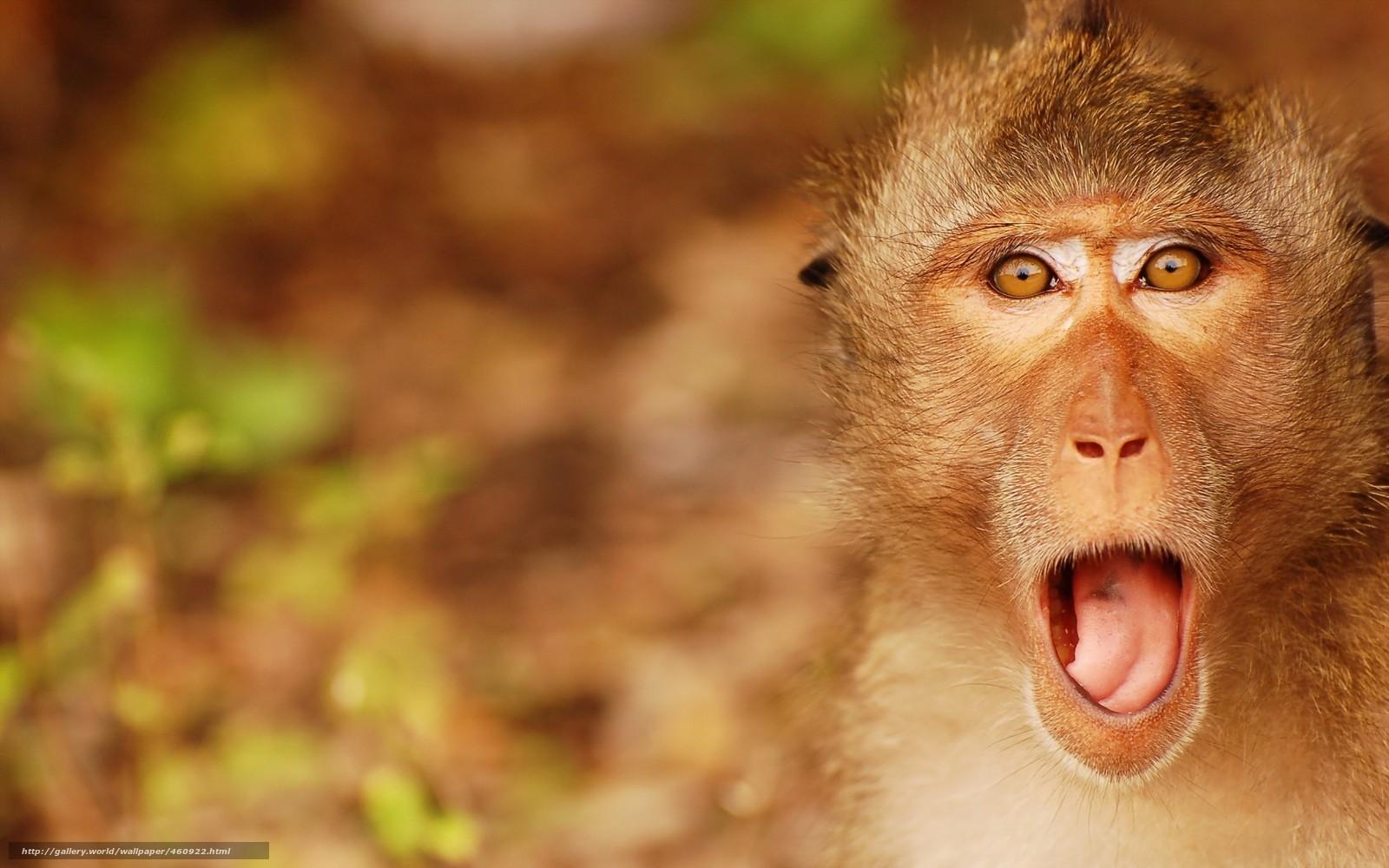 口を開ける猿