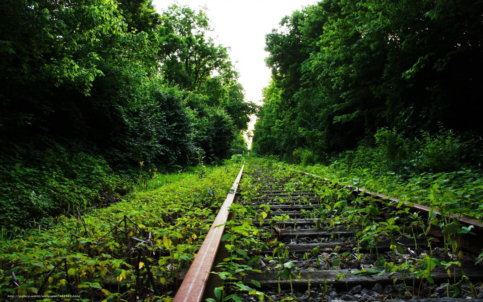 Скачать обои лето,  лес,  путь бесплатно для рабочего стола в разрешении 1680x1050 — картинка №461591