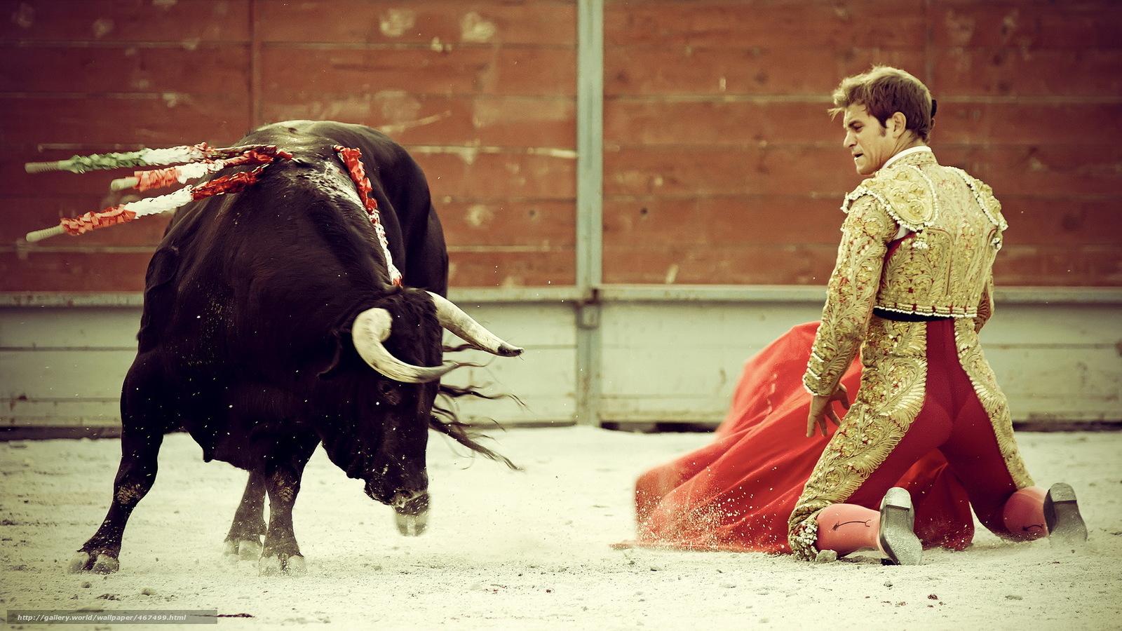 bull fighting 1920x1080 hd - photo #42
