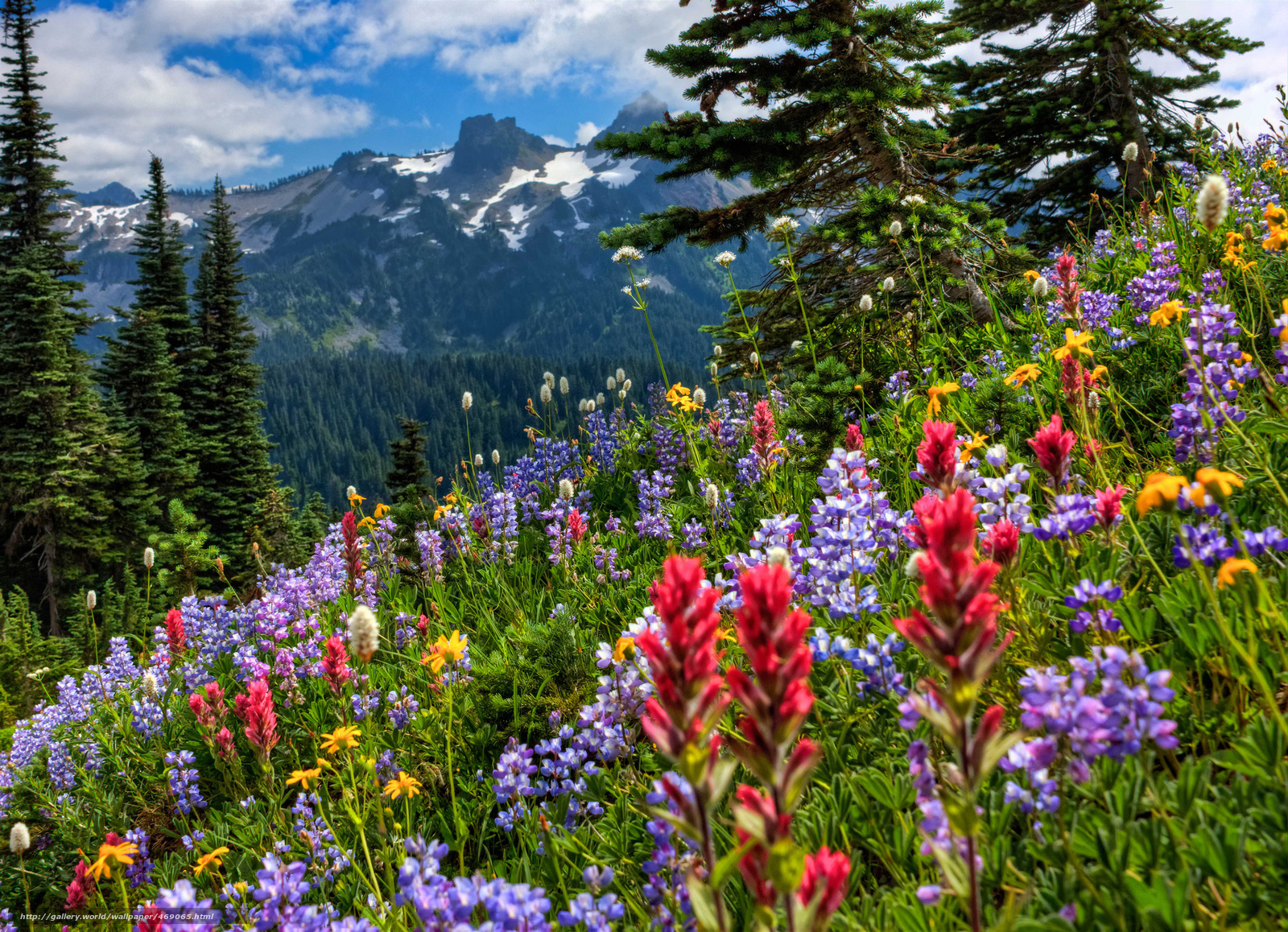 Download wallpaper mount rainier national park,  Mountains,  Flowers free desktop wallpaper in the resolution 2048x1482 — picture №469065