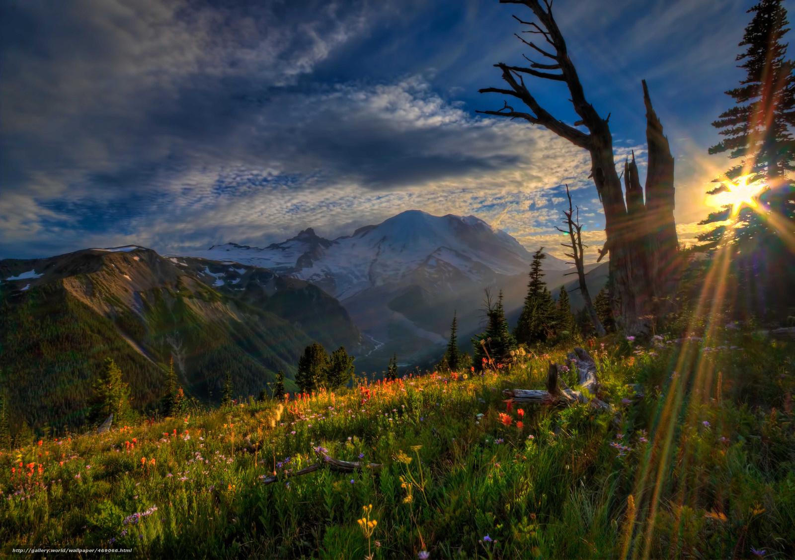 Descargar gratis Parque Nacional Monte Rainier,  puesta del sol,  Montaas,  Flores Fondos de escritorio en la resolucin 2048x1441 — imagen №469066