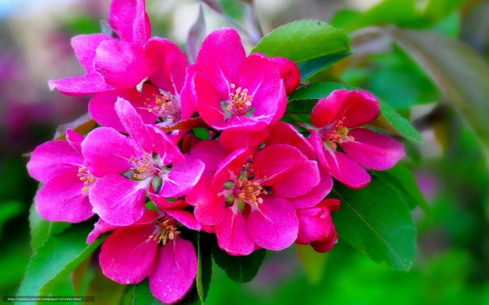 Скачать обои цветение,  ветка,  макро бесплатно для рабочего стола в разрешении 1680x1050 — картинка №471092