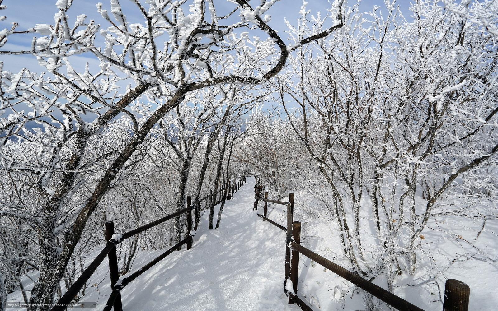 scaricare gli sfondi inverno,  alberi,  neve,  traccia Sfondi gratis per la risoluzione del desktop 1920x1200 — immagine №472215