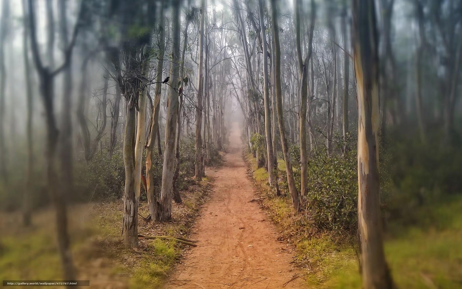 scaricare gli sfondi vicolo,  sentiero,  traccia,  alberi Sfondi gratis per la risoluzione del desktop 1680x1050 — immagine №472767