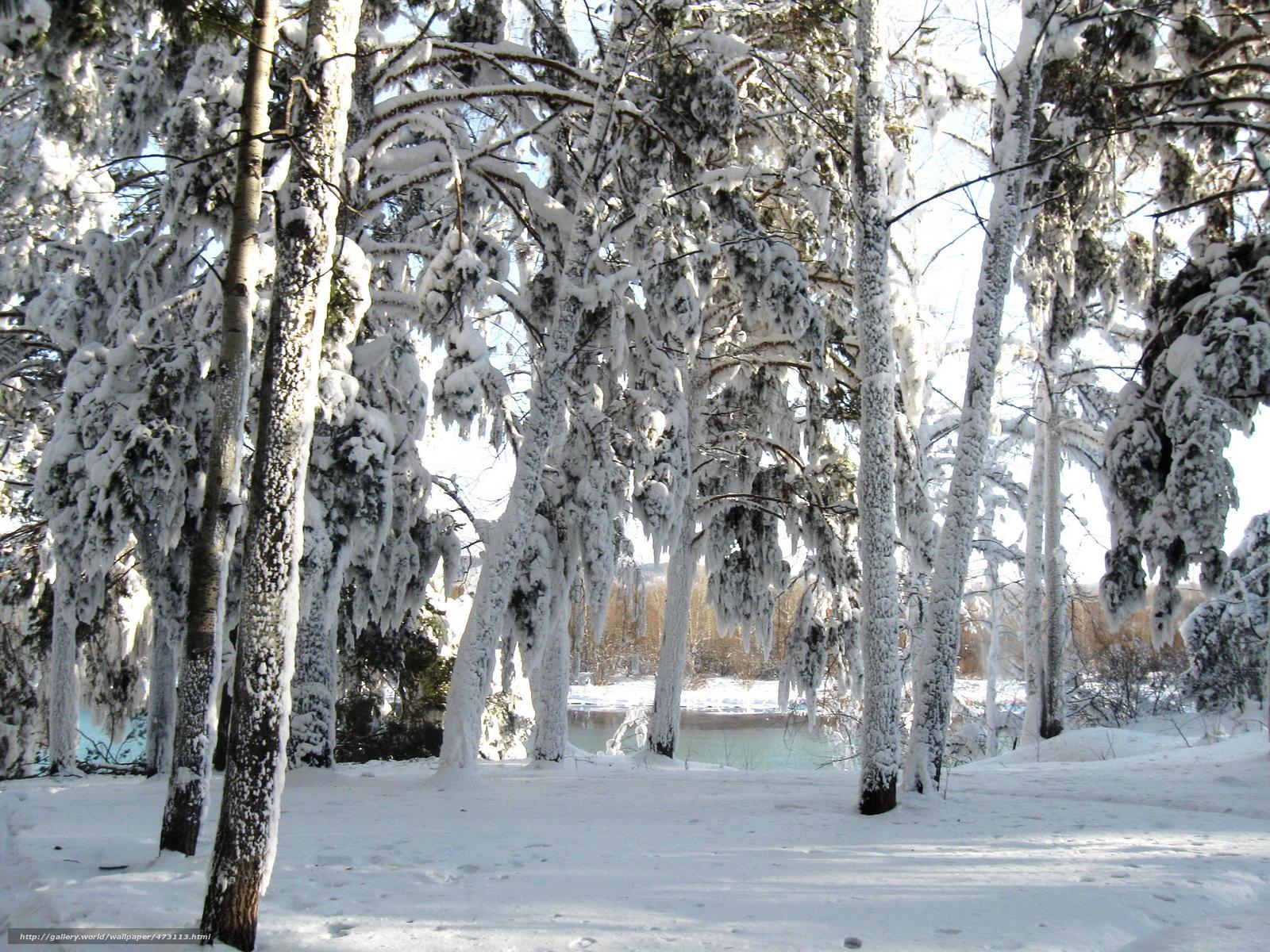 Tlcharger Fond d'ecran hiver,  neige,  arbres Fonds d'ecran gratuits pour votre rsolution du bureau 2304x1728 — image №473113