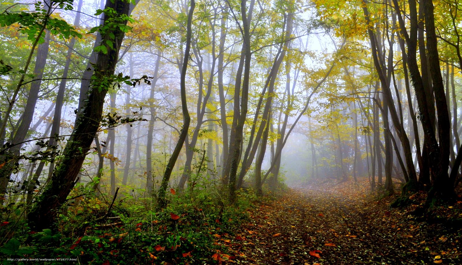 scaricare gli sfondi foresta,  alberi,  traccia,  autunno Sfondi gratis per la risoluzione del desktop 4288x2463 — immagine №473577