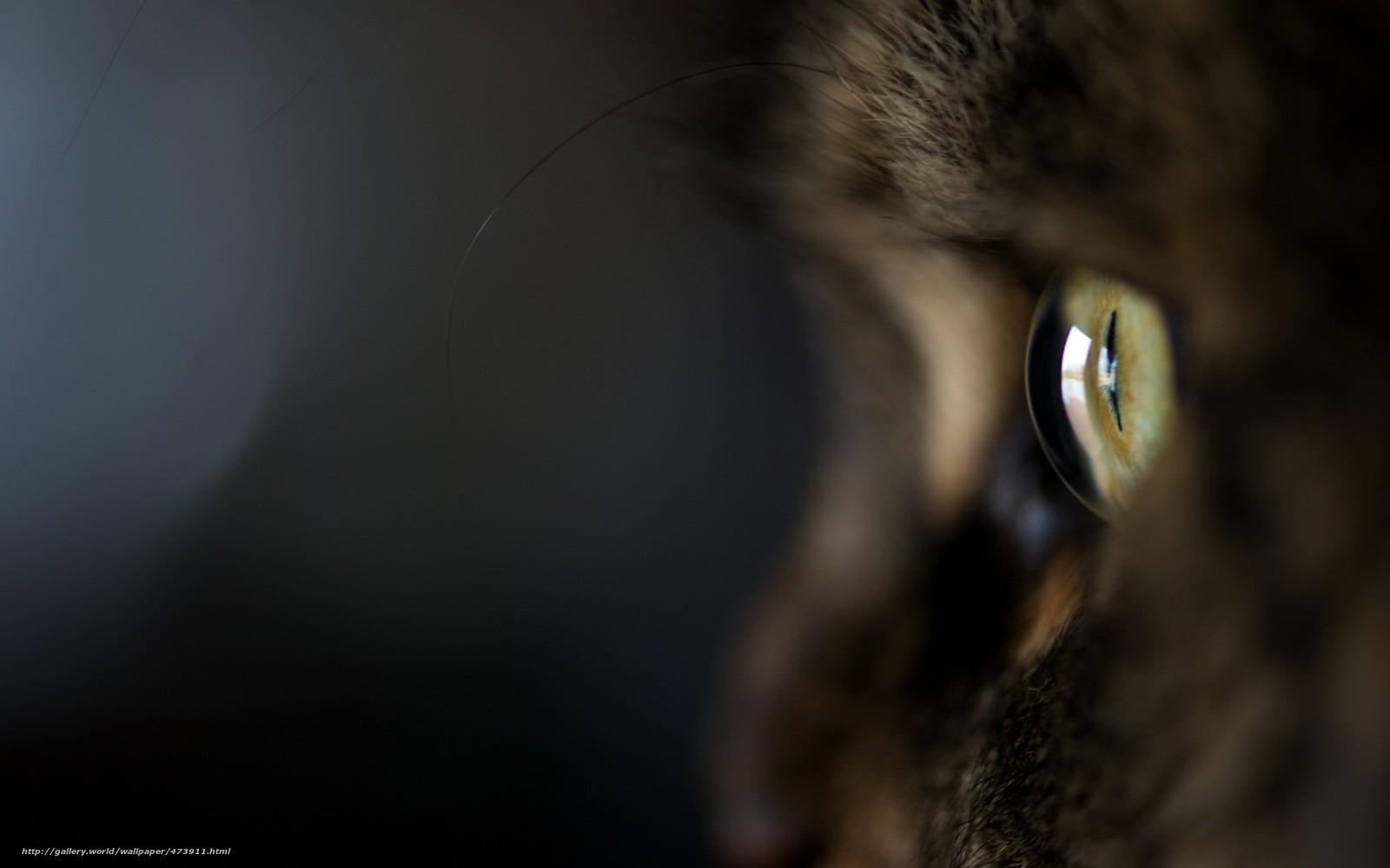 scaricare gli sfondi gatto,  gatto,  Kote,  Macro Sfondi gratis per la risoluzione del desktop 1680x1050 — immagine №473911
