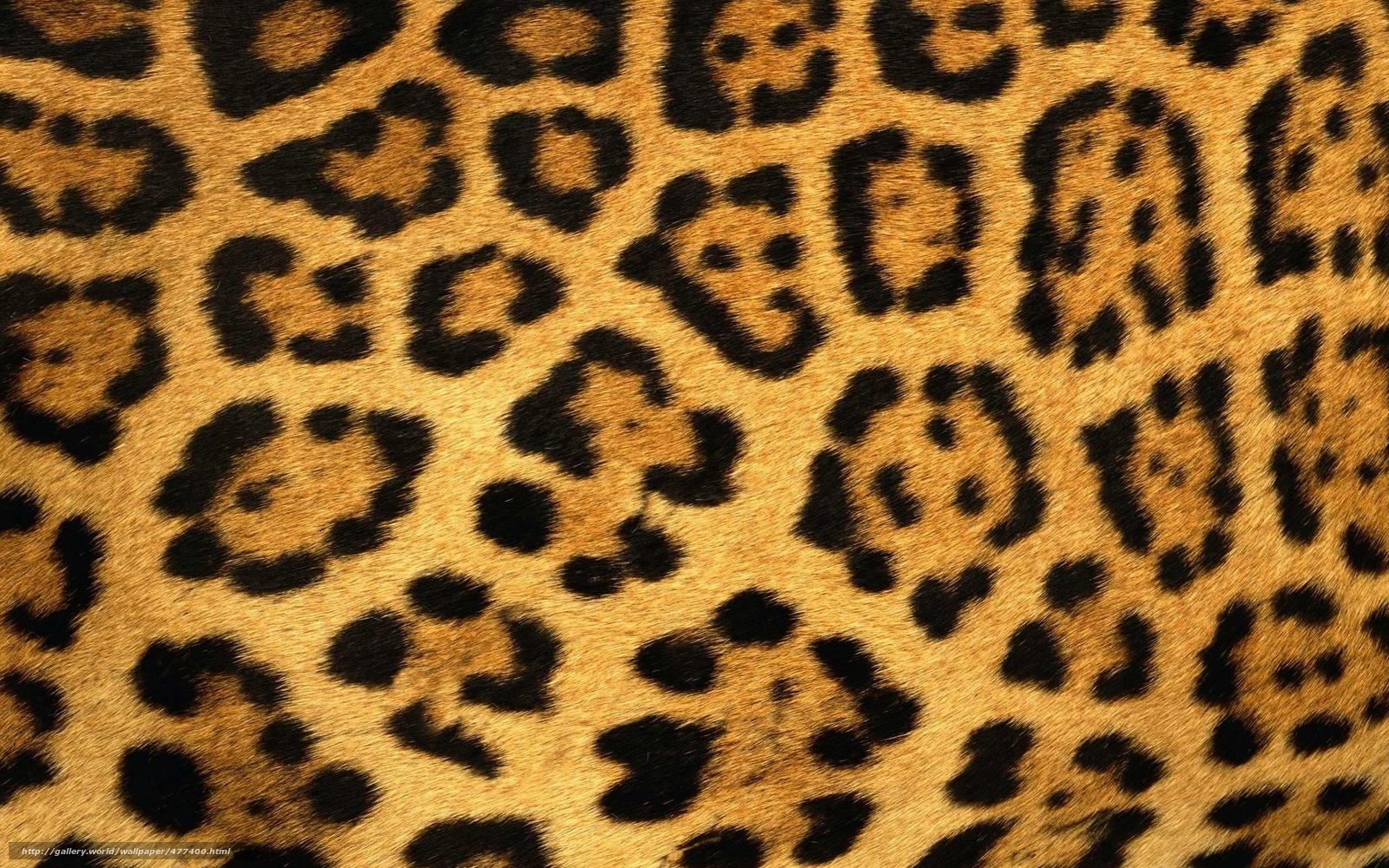 Tlcharger Fond D Ecran Jaguar Fourrure Peau Laine Fonds