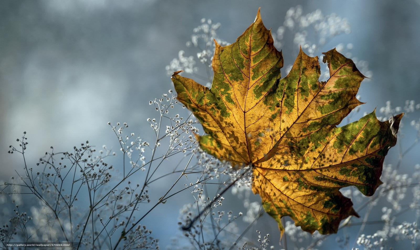 Скачать обои осень,  сухая трава,  лист кленовый бесплатно для рабочего стола в разрешении 2048x1222 — картинка №479869