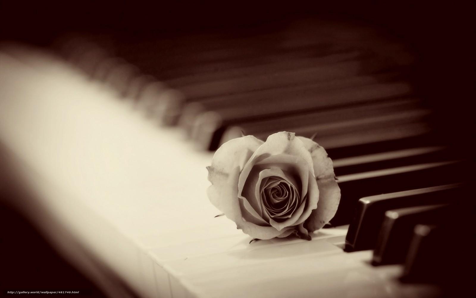 Tlcharger Fond Decran Rose Piano Fonds