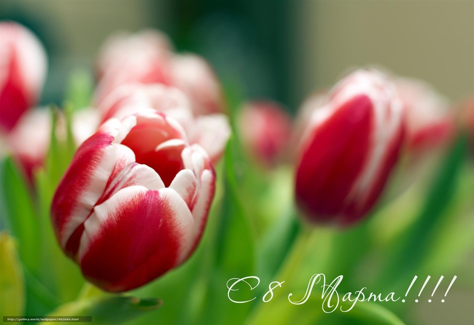 Скачать обои с 8 марта,  цветы,  фон бесплатно для рабочего стола в разрешении 2048x1404 — картинка №482686