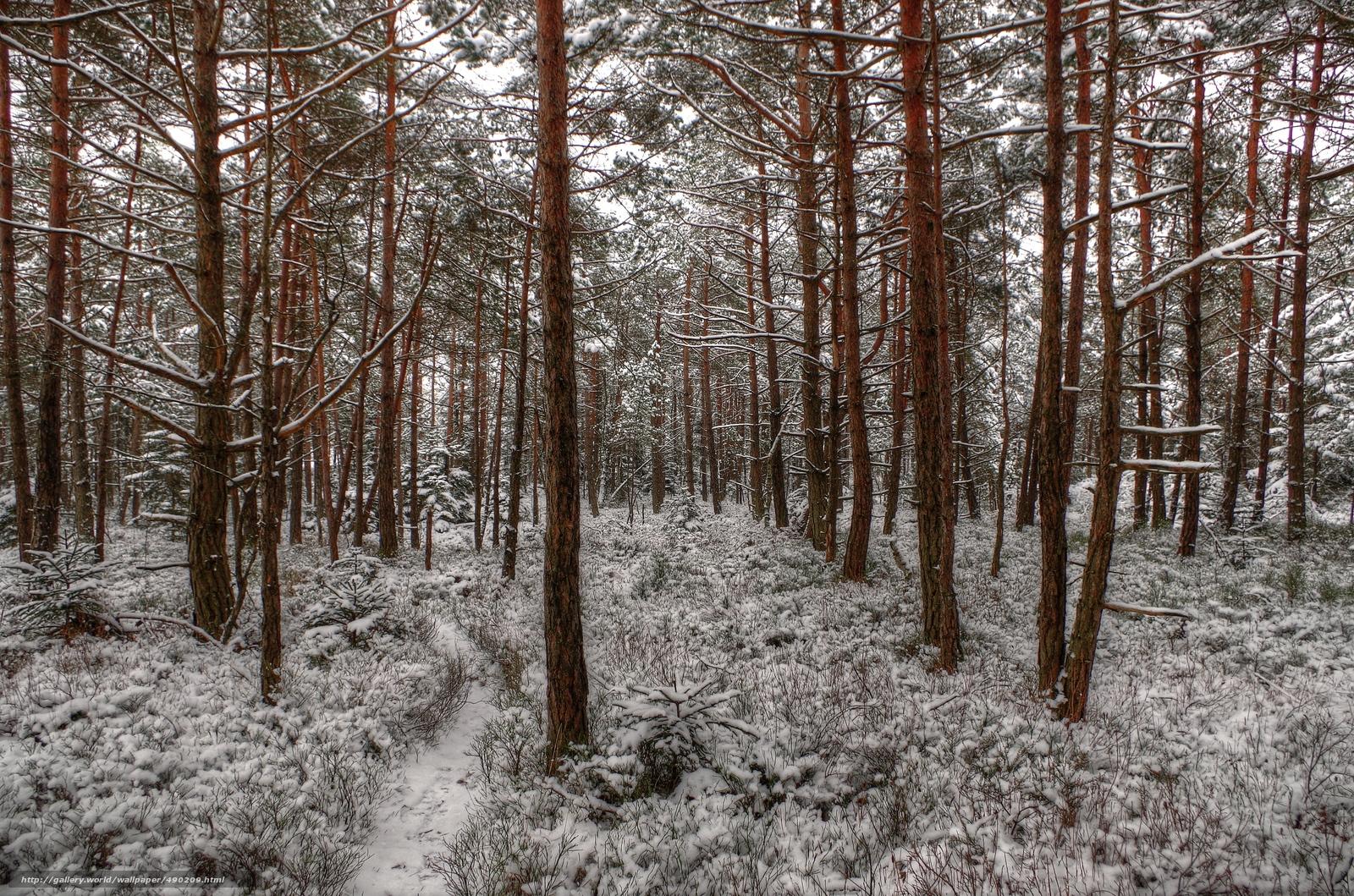 scaricare gli sfondi inverno,  foresta,  neve,  sentiero Sfondi gratis per la risoluzione del desktop 4924x3258 — immagine №490209