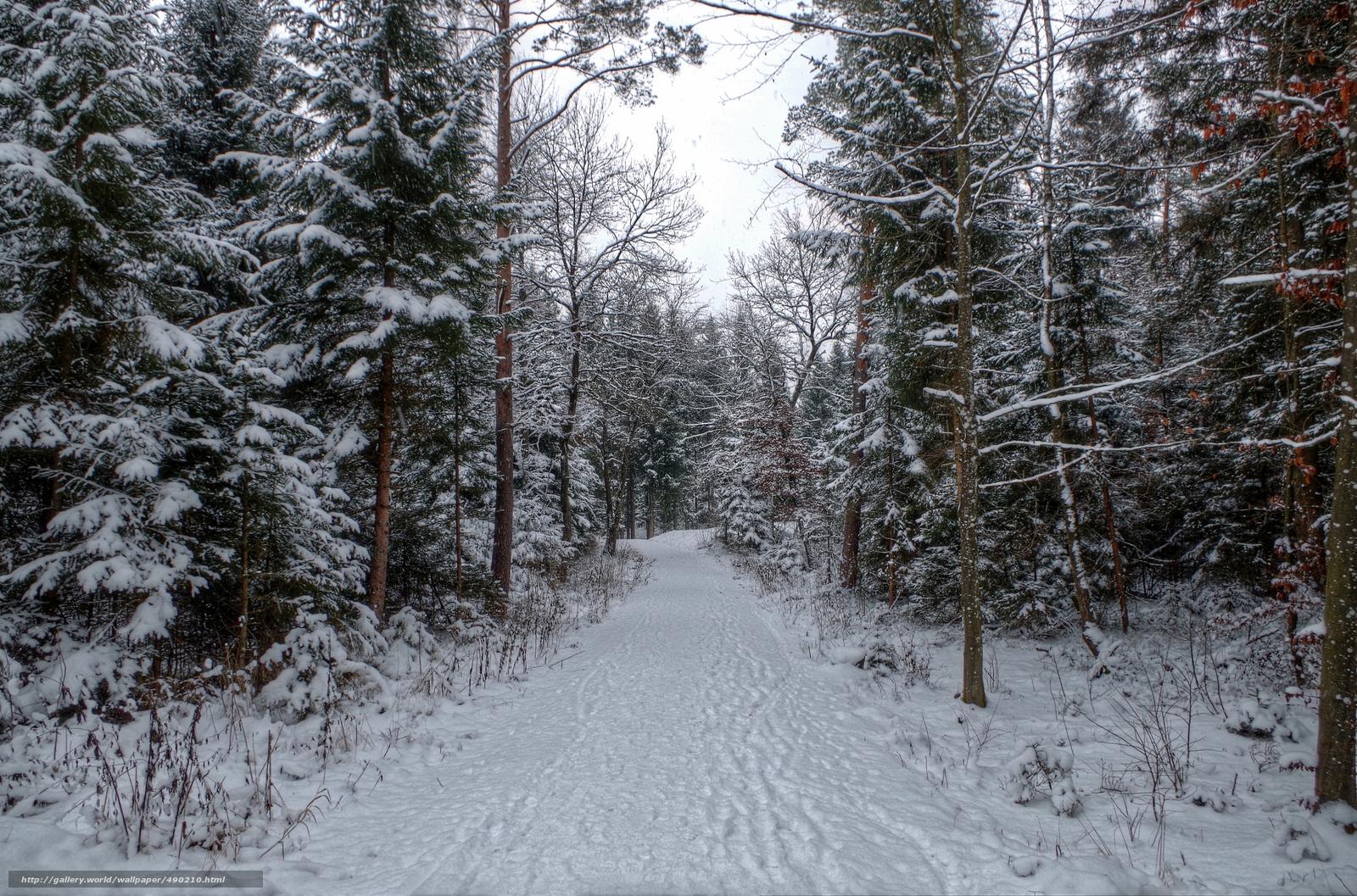 scaricare gli sfondi inverno,  foresta,  neve,  sentiero Sfondi gratis per la risoluzione del desktop 4918x3249 — immagine №490210