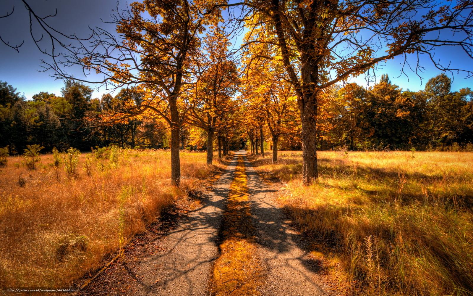 Tlcharger Fond d'ecran route,  arbres,  automne,  paysage Fonds d'ecran gratuits pour votre rsolution du bureau 2560x1600 — image №493060