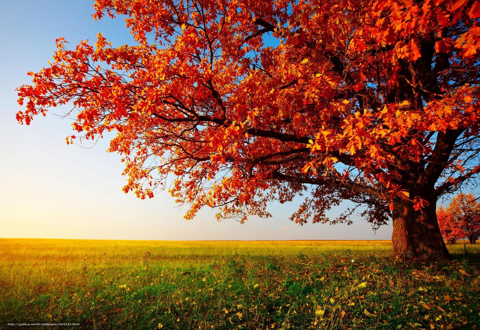 Scaricare gli sfondi autunno albero paesaggio sfondi for Foto per desktop gratis autunno
