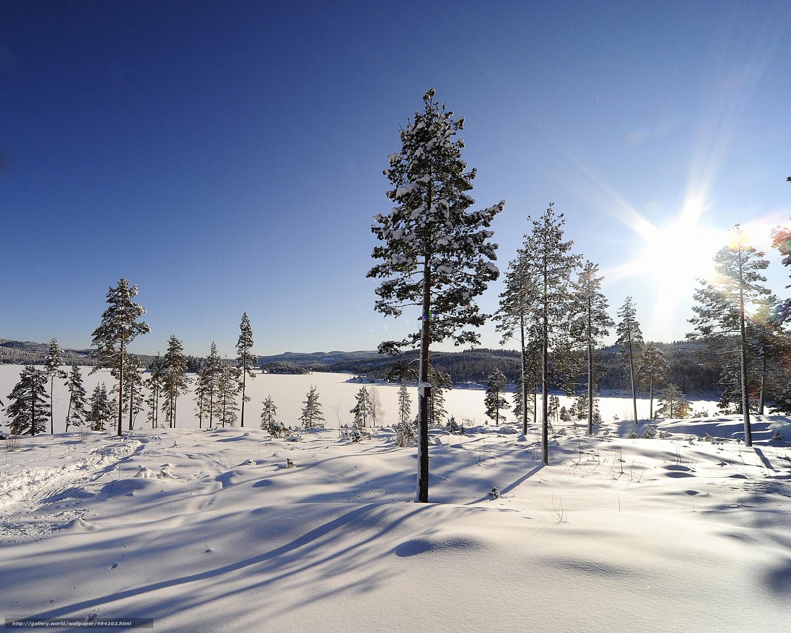 下载壁纸 冬季,  树,  太阳 免费为您的桌面分辨率的壁纸 5000x4000 — 图片 №494202