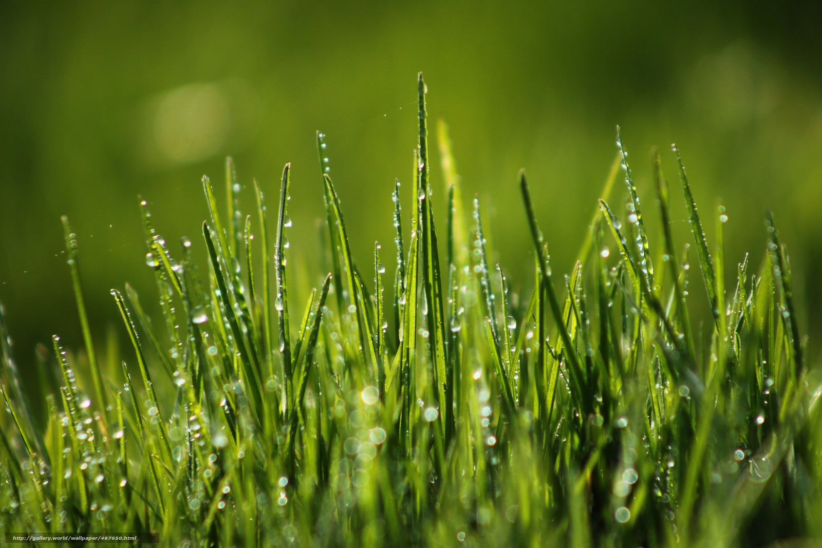 download wallpaper grass dew macro free desktop