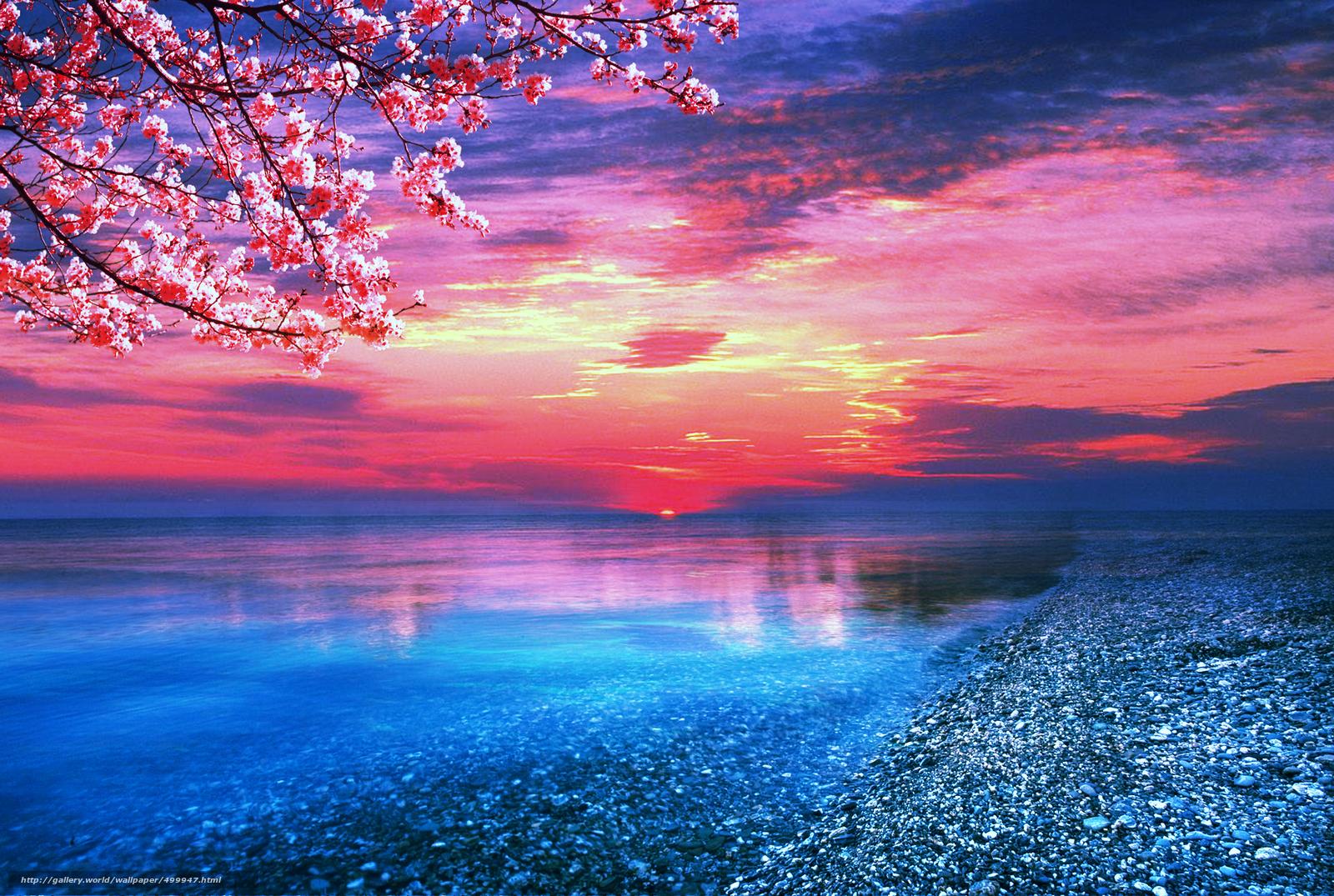 Скачать обои закат,  море,  берег,  ветки деревьев бесплатно для рабочего стола в разрешении 1920x1290 — картинка №499947